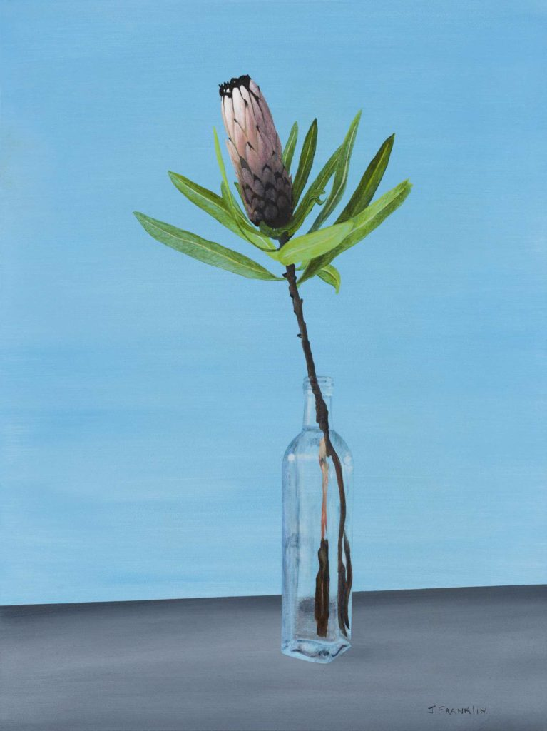 Protea flower in a vase